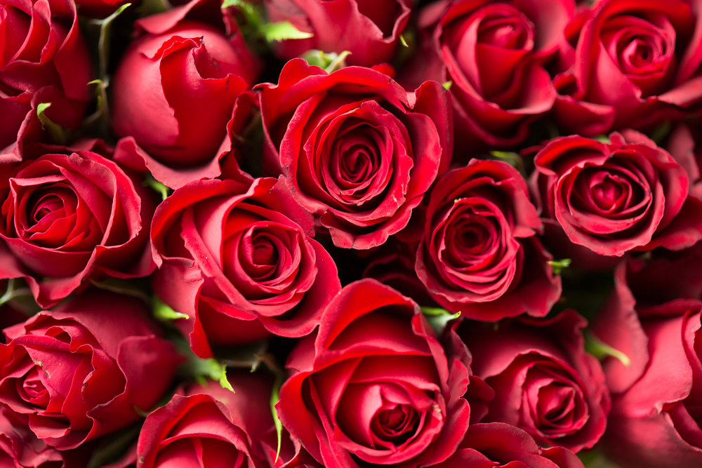 An image showing bright red roses, an example of rich visual content which could make up part of your Mother's Day Marketing Strategy.